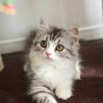 猫の日にむけて本22冊を紹介!写真集や小説、珍しい塗り絵に新書まで発見!