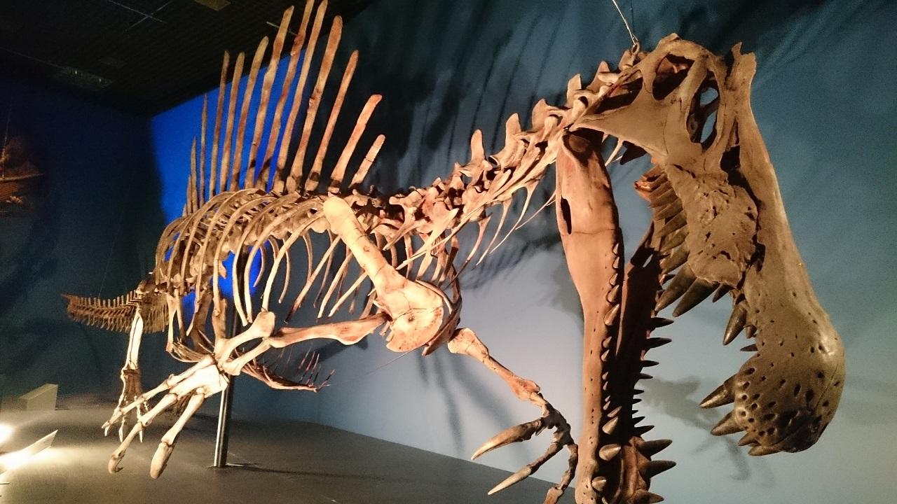 恐竜博2016_スピノサウルス_0