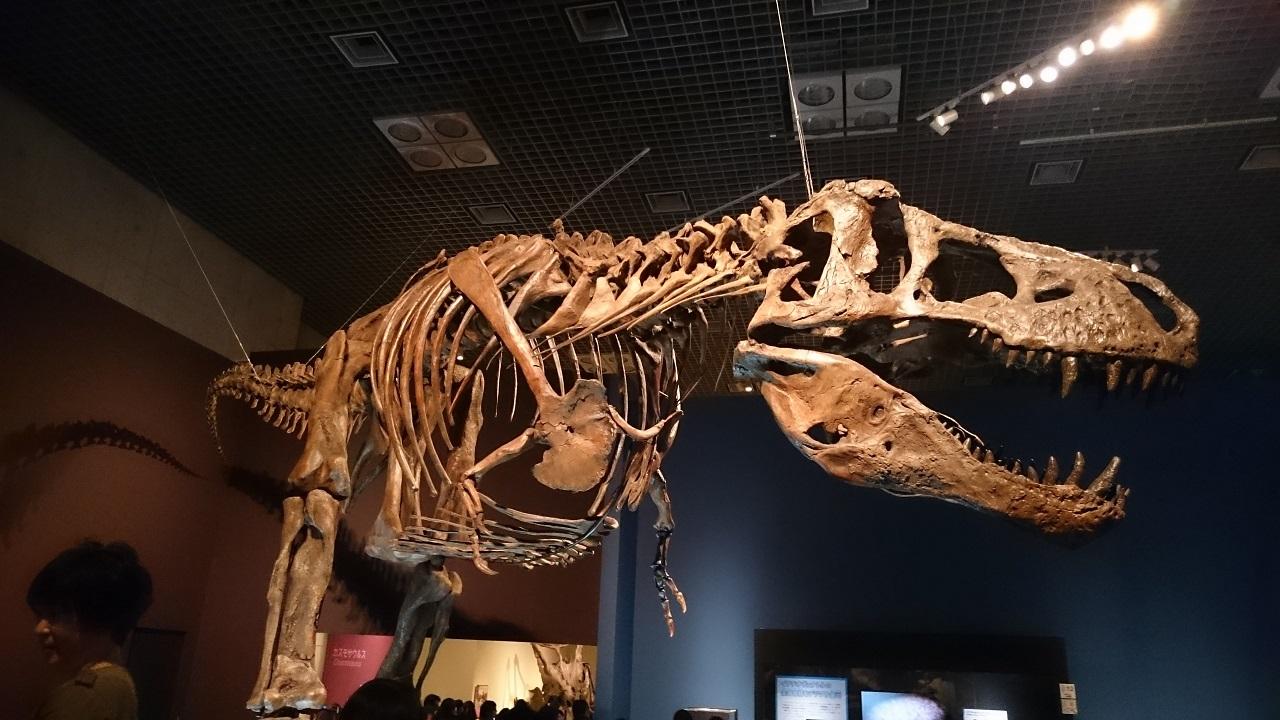 恐竜博2016_ティラノサウルス_0