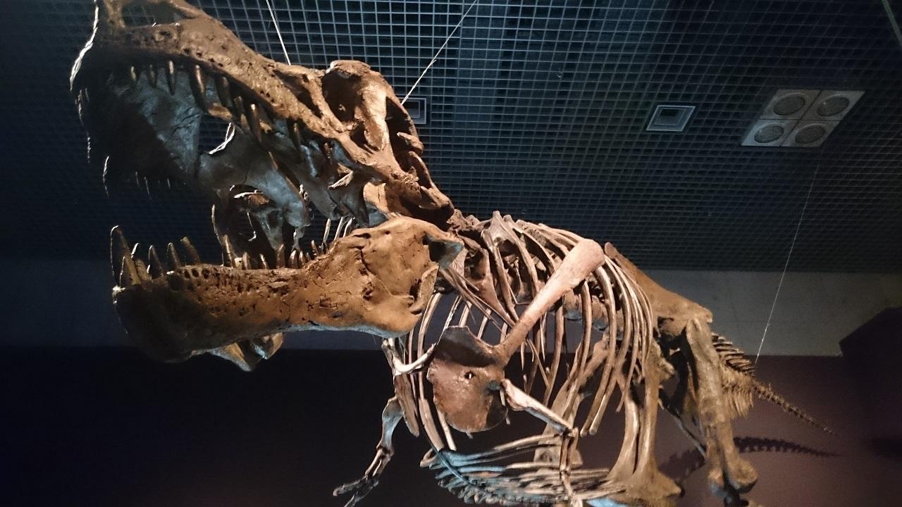 恐竜博2016_ティラノサウルス_1