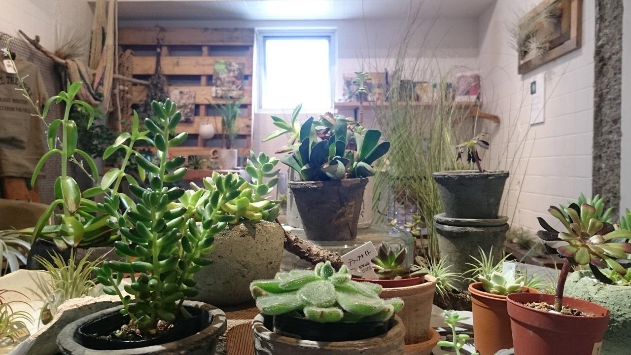 上野_ROUTE BOOKS_植物は買える_1