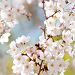 朝井リョウの新刊や宮部みゆき、有川浩などの文庫本が発売!【2016年4月】
