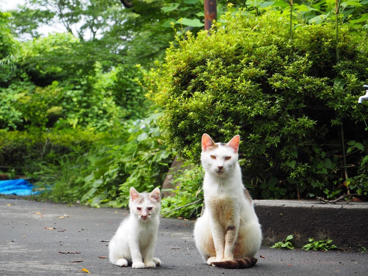 小田原城址公園_猫2