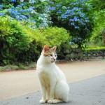 小田原城址公園にいたネコ!可愛すぎるので撮影してきた!