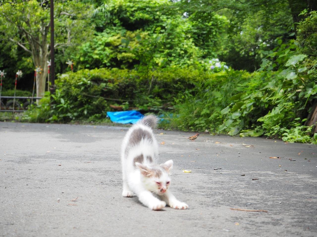 小田原城址公園_猫B_1