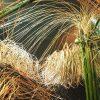 竹がスゴイ! FLOWERS by NAKED NAGOYA フォトレポート